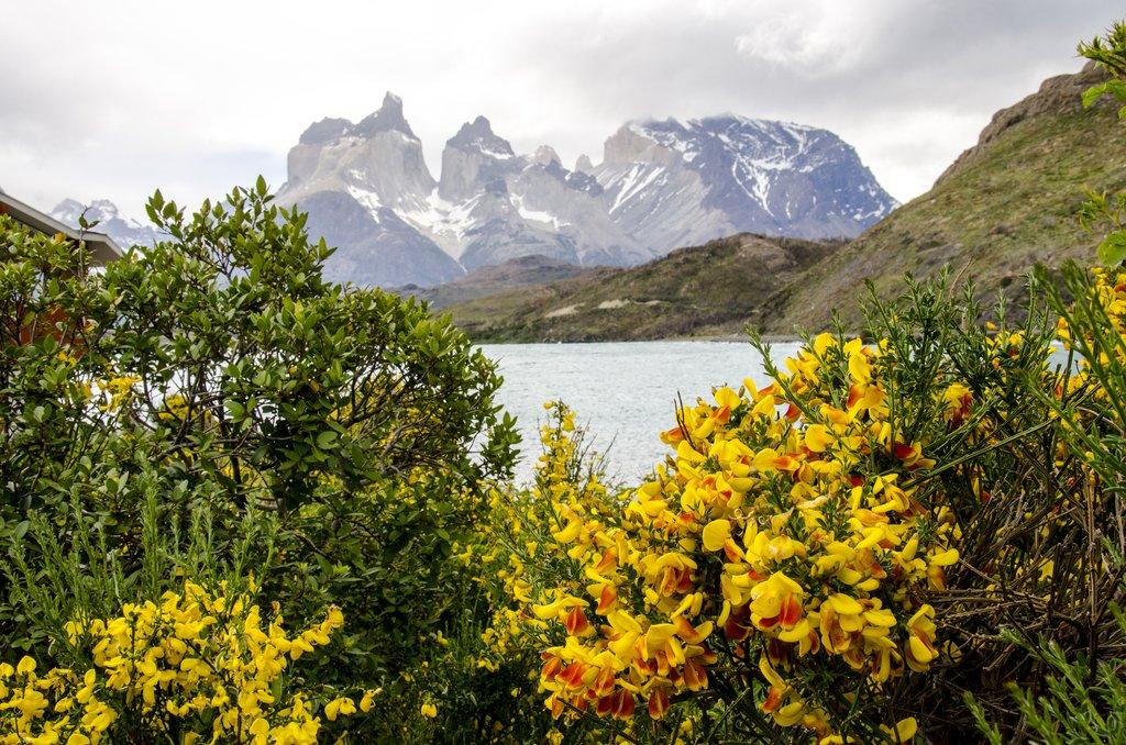 Summer blooms in Torres del Paine