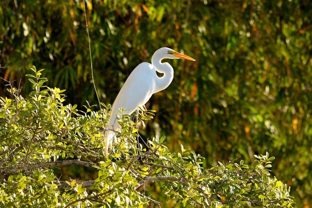 Heron in the Pantanal