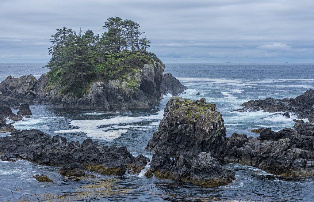 Windswept coastline of the Pacific Rim