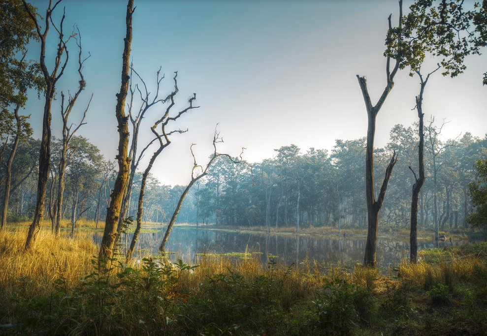 Early morning in Chitwan National Park