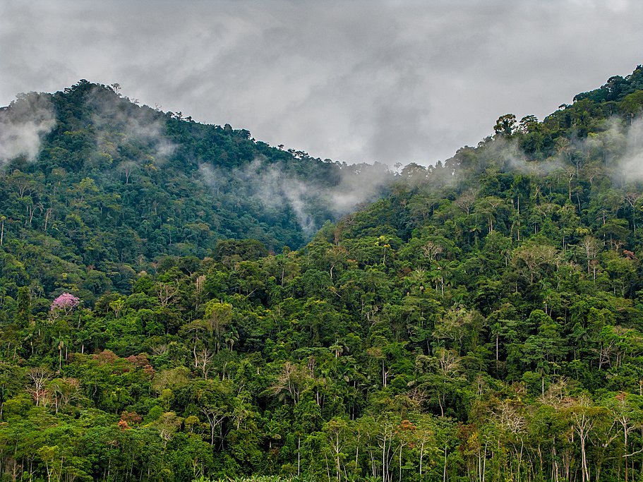 Rainforest in Manu National Park