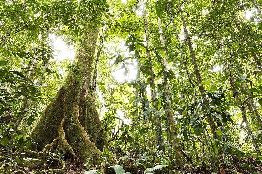 Ecuador's Amazon jungle