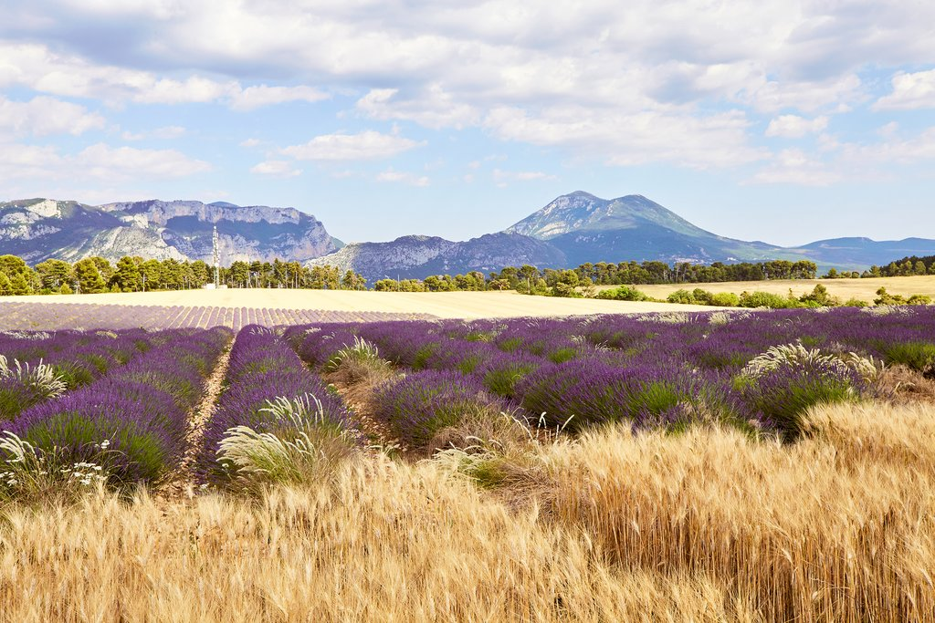 Lavender fields along the Moustiers road
