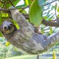 Costa Rica Wildlife Road Trip - 8 Days
