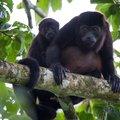 Costa Rica Wildlife Explorer – 12 Days