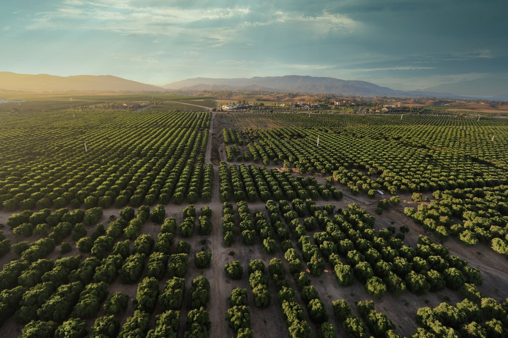 Rolling vineyards of Temecula