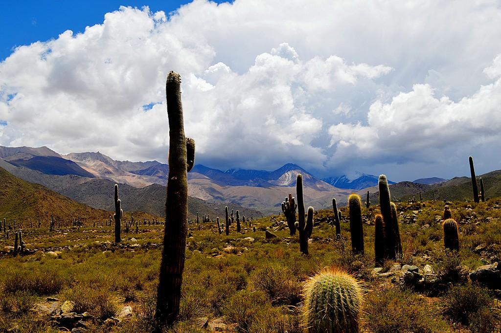 Puna, Argentina
