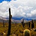 Trekking Argentina's Salta Region - 9 Days
