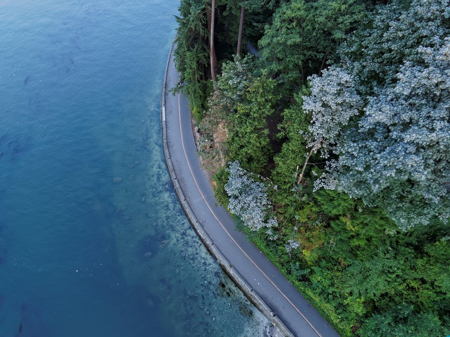 Temperate rainforest hugs Stanley Park's Seawall Promenade outside downtown Vancouver