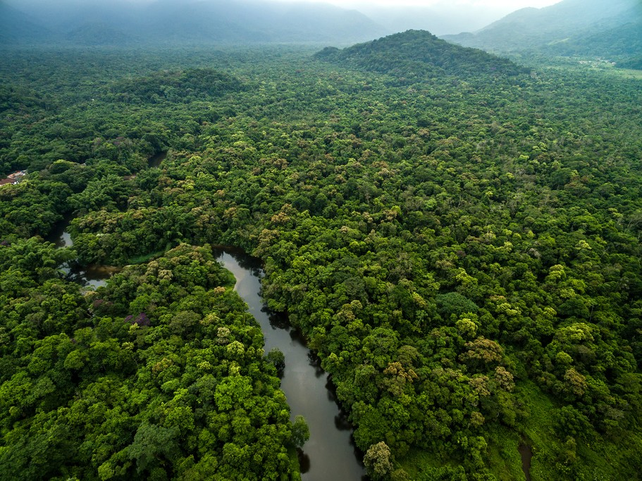 Aerial view of Amazon's lush rainforest.