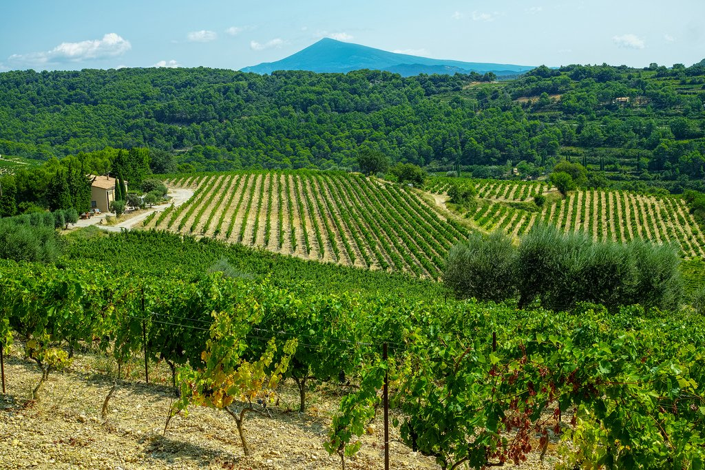 Tour the number of vineyards strewn throughout Provence, like this one in the Gigondas region