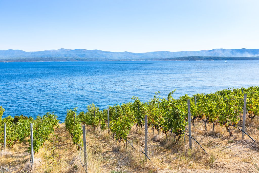 Vineyards on the island of Brač, Croatia
