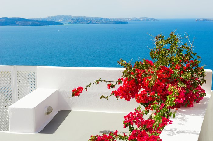 Flowers on a Santorini terrace
