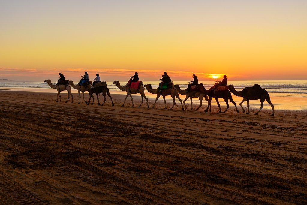 Camel caravan at beach of Essaouira at sunset