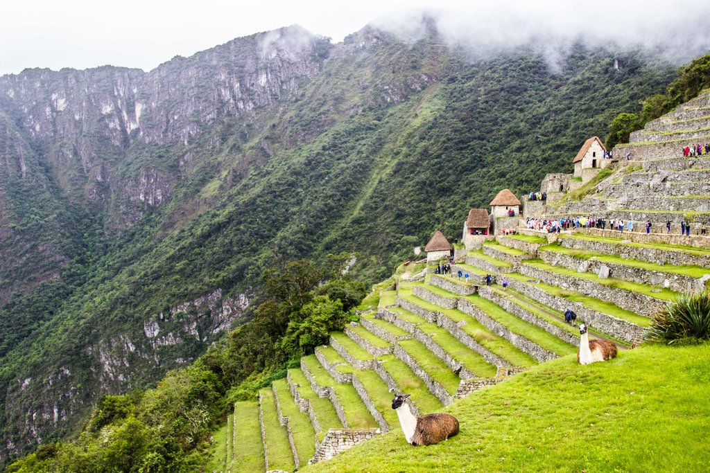 Llamas graze in the ancient citadel of Machu Picchu © Kiki Deere