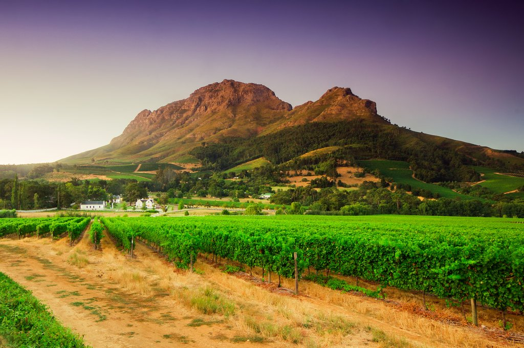 A winery in Cape Winelands, South Africa