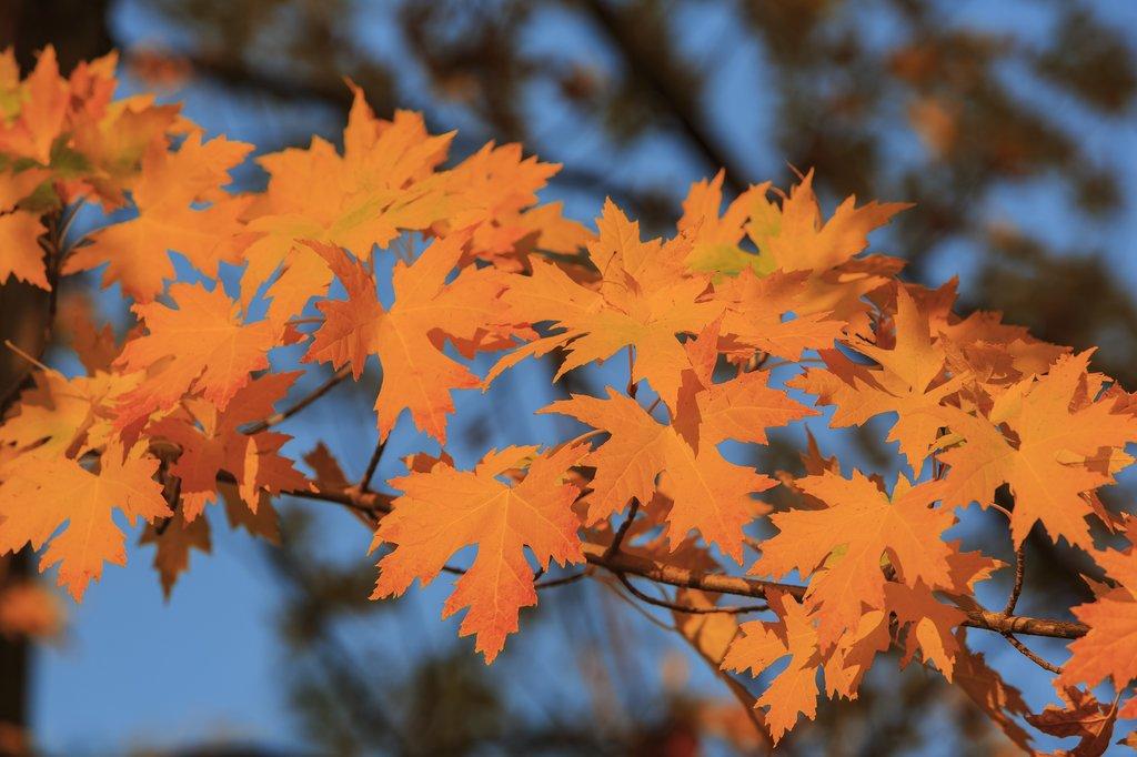 Fall foliage in Oak Glen