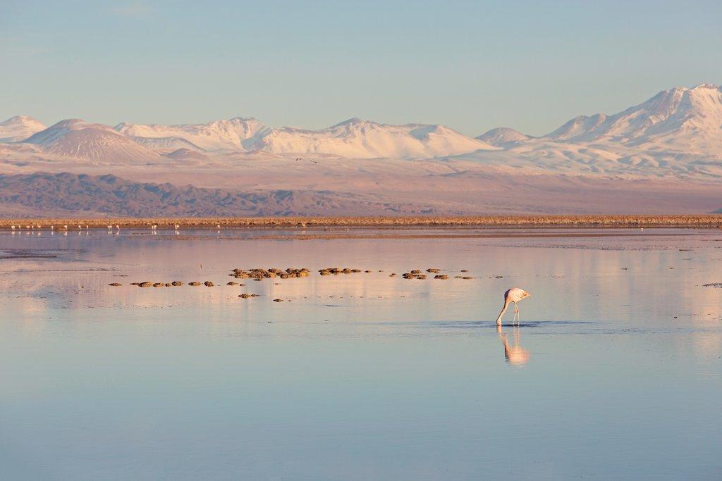 A pristine laguna in the Atacama Desert, Chile