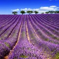 Hiking & Hilltop Villages in Provence: 7 Day Itinerary