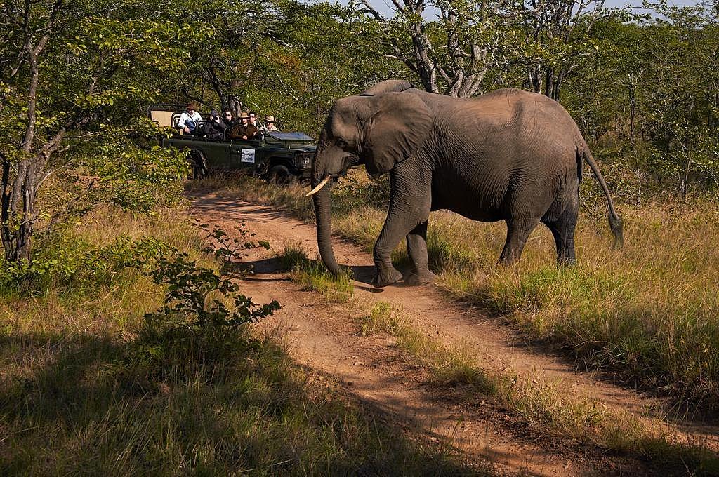 Safari experience in Moremi Game Reserve