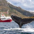 Experience Chile's Patagonian Fjords and Lake District - 12 Days