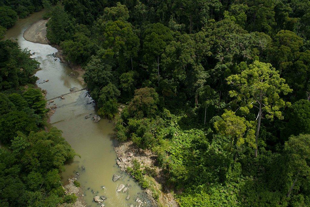 An aerial view of Segama River, Danum Valley