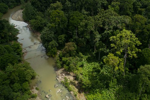 An aerial view of Segama River, Danum Valley