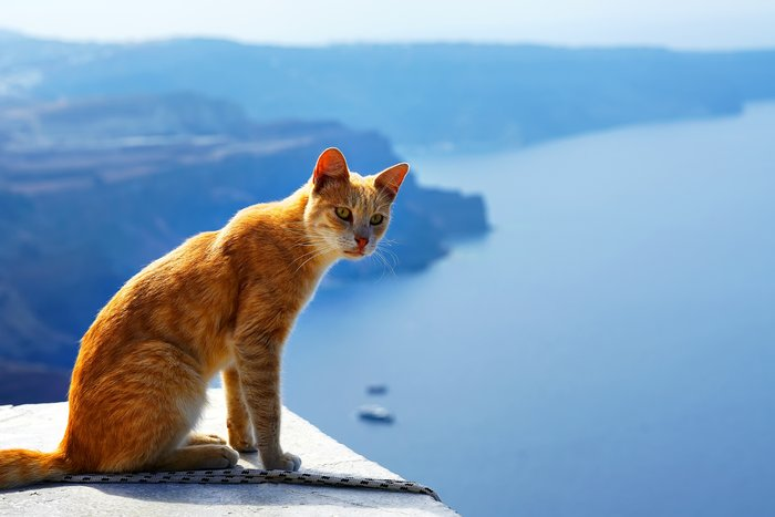 Catting about on the caldera