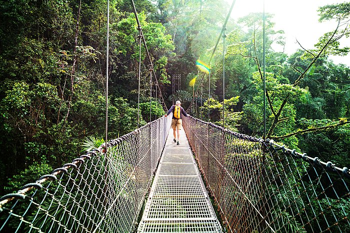 Hanging bridge in Monteverde National Park