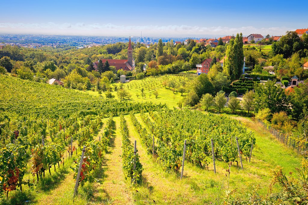 Vineyards of Croatia