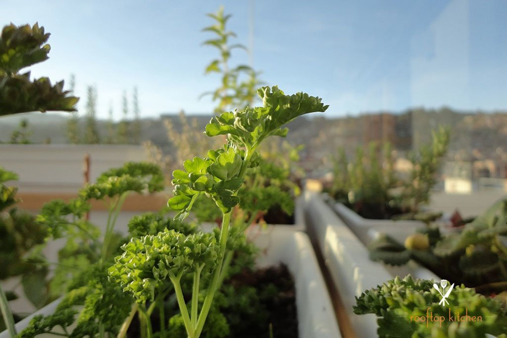Rooftop garden in Cusco