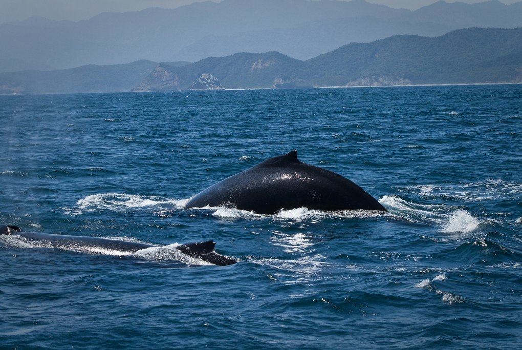 Isla de la Plata has great whale-watching this month
