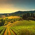 Vineyard Hopping in Corsica: 7 Days