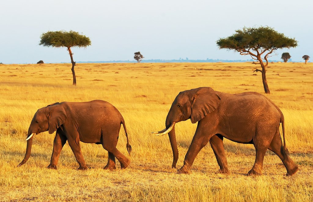 Elephant sightings in Masai Mara National Park