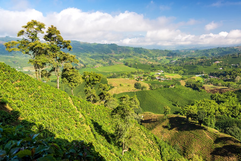 How Many Days Should You Spend in Colombia's Coffee Region?
