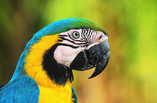 The Pantanal is brimming with tropical birds like this blue and yellow macaw