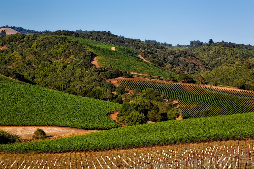 Ride through the rolling hills of Sonoma County