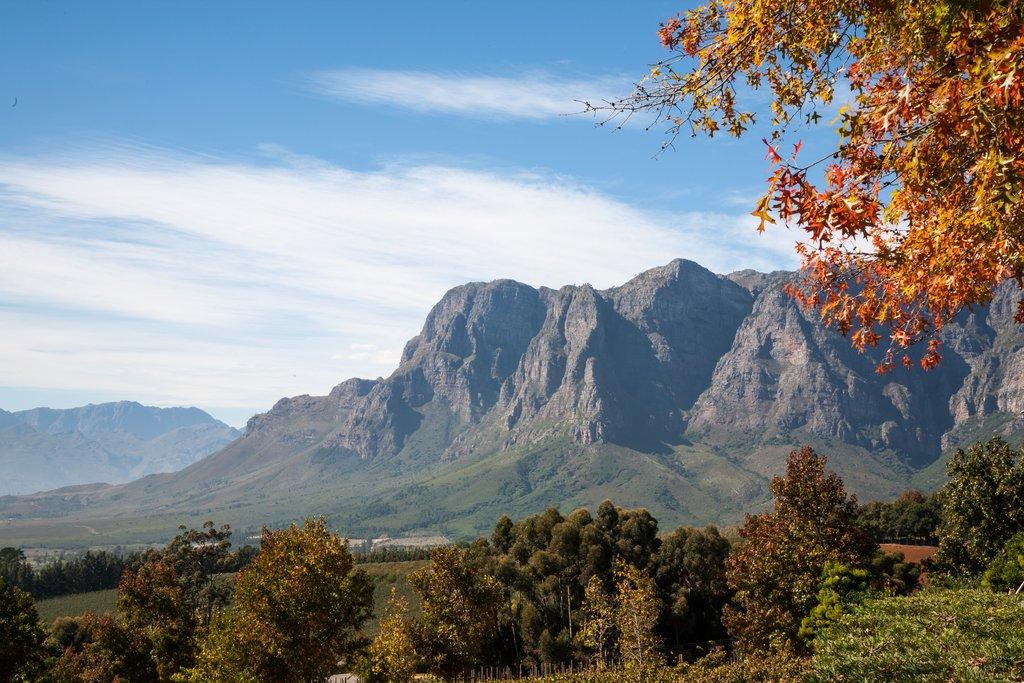 Cape Wine Lands in Autumn