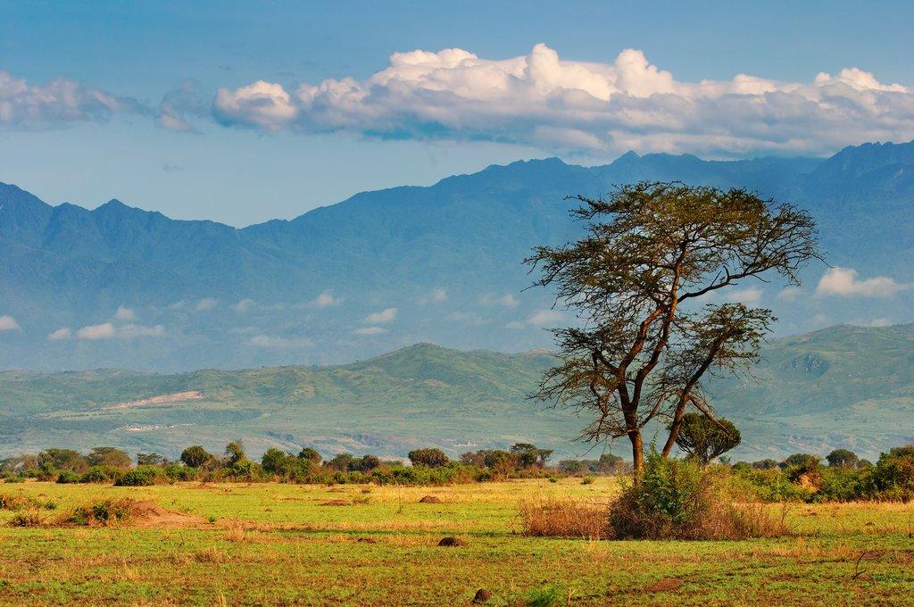 African savannah in Uganda
