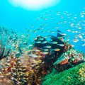 Ultimate Guide to Diving & Snorkeling in Okinawa