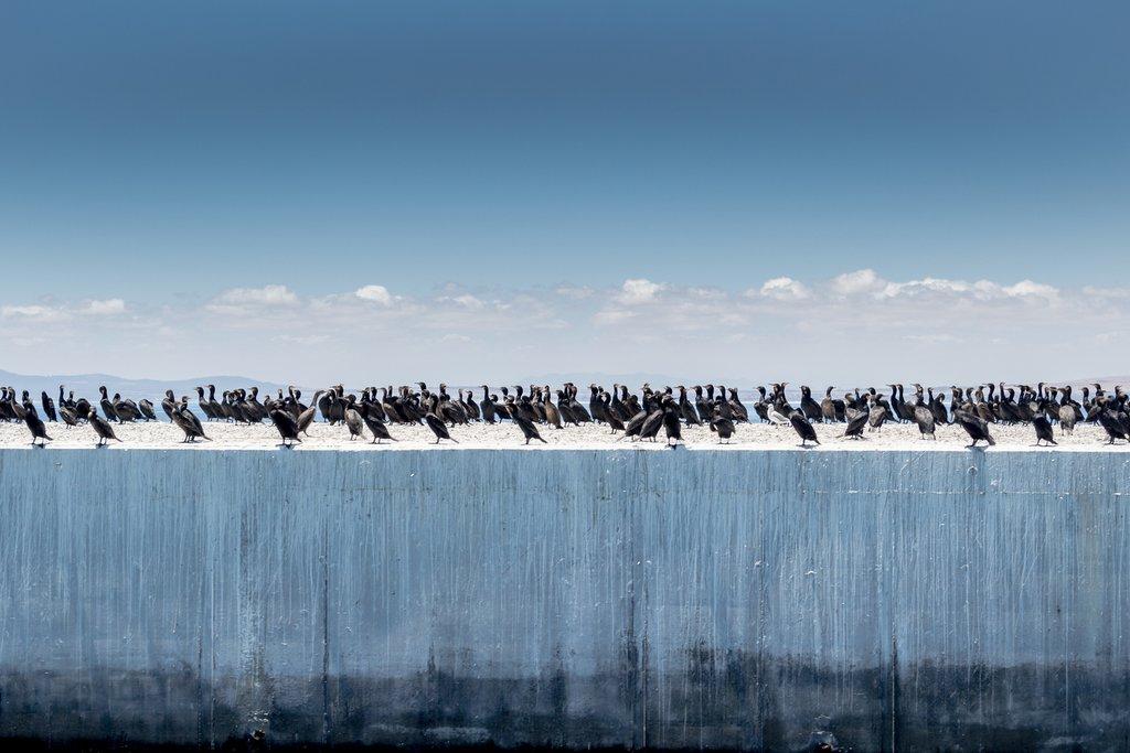 Cormorants off Robben Island