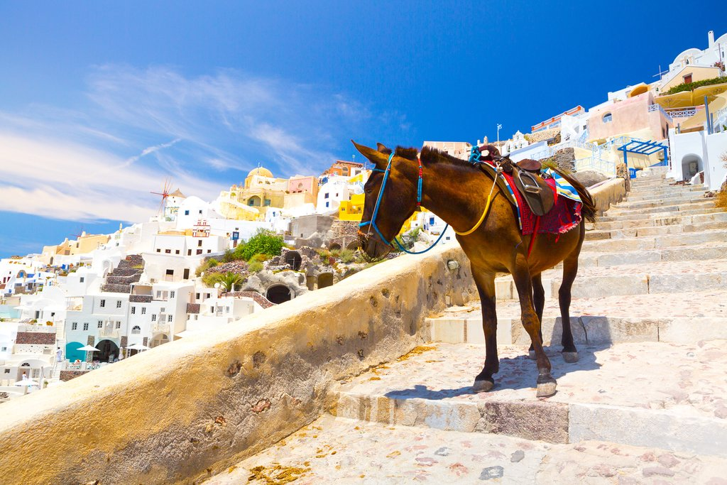 Friendly residents of Santorini