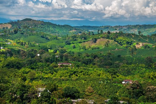 Colombia Coffee Country