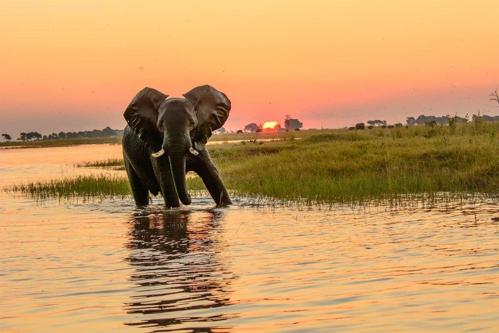 Botswana's majestic wildlife
