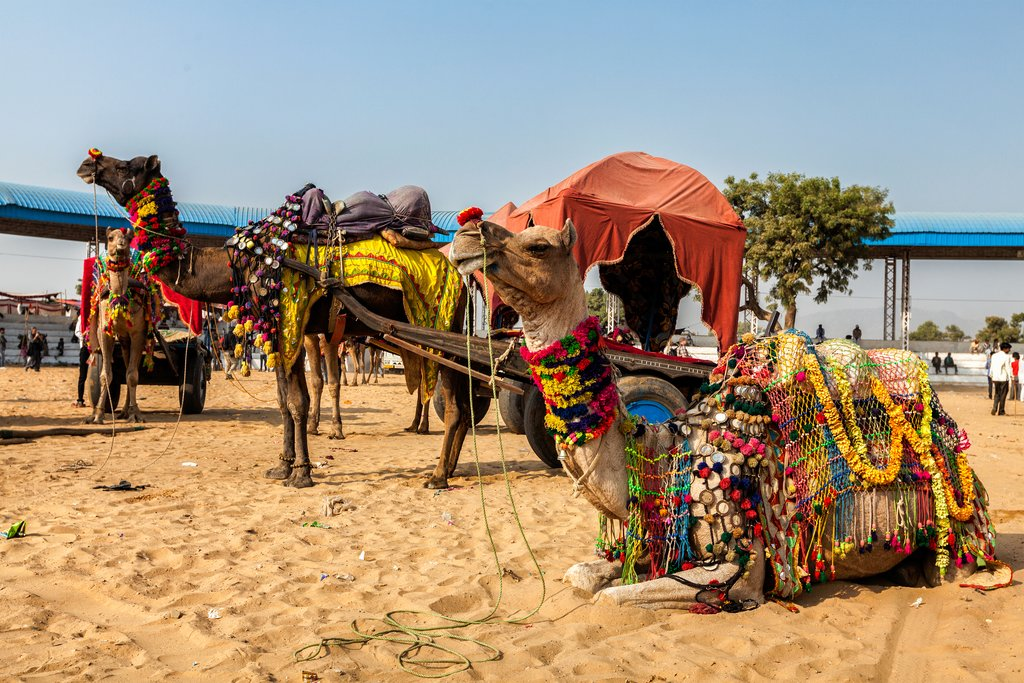 The camel fair in Pushkar, Rajasthan