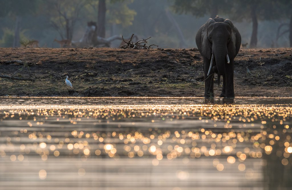 Elephant at the Pools