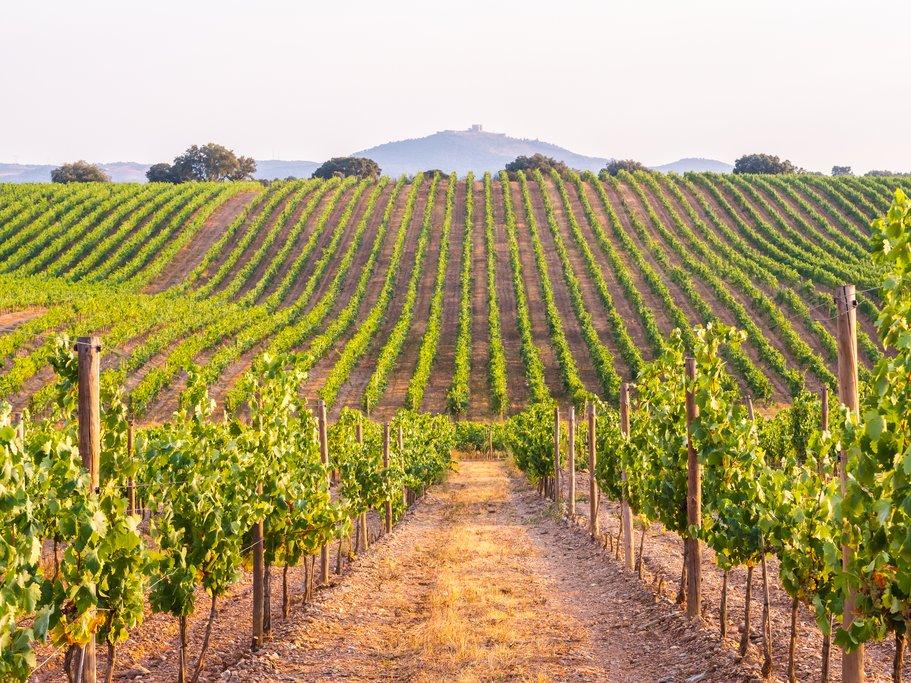 The vineyards of Alentejo