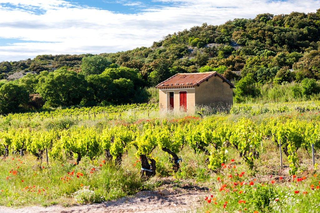 Vineyards near Chateauneuf-du-Pape