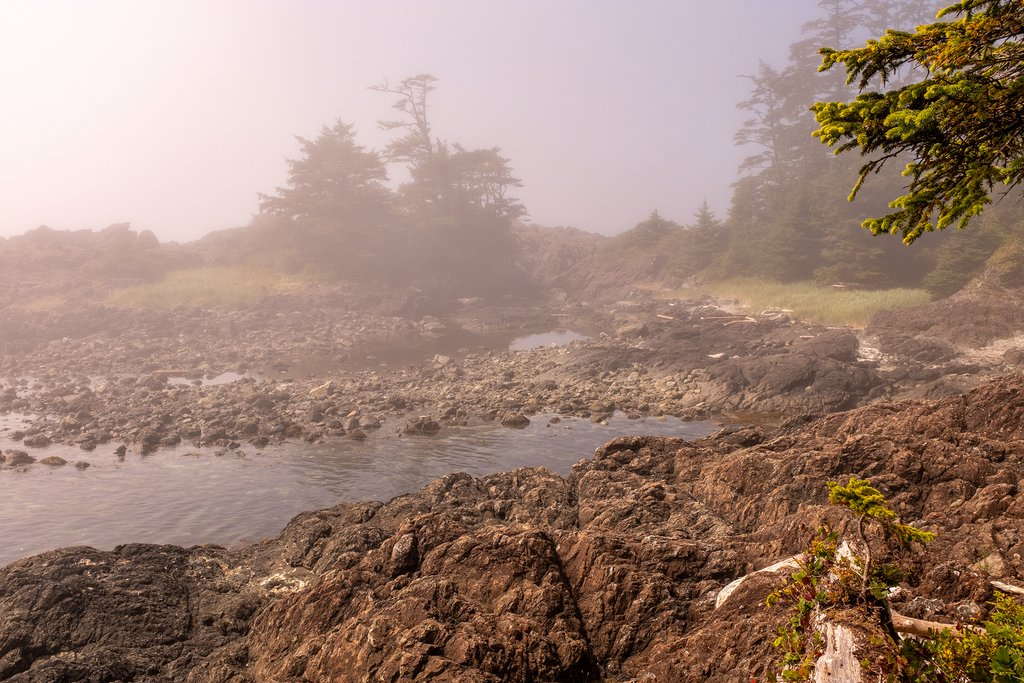 Fog enveloping the rugged coastline of the Pacific Rim