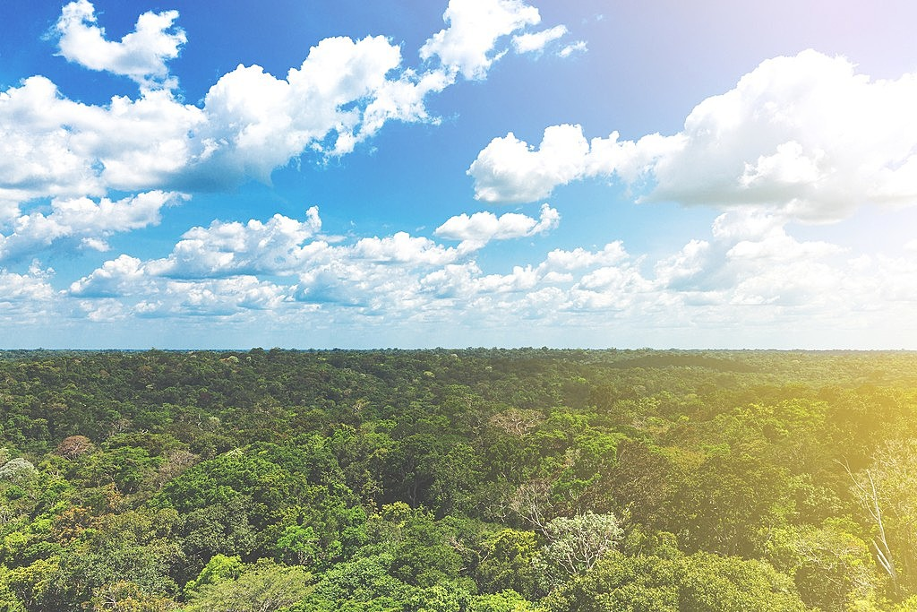Treetop view of the Amazon  Rainforest near Puerto Maldanado